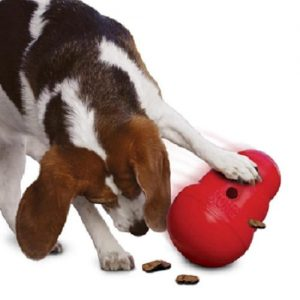 KONG Wobbler Dog toy and food feeder with playful Beagle